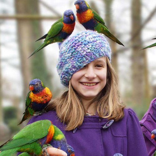 Responsive Website Design imagery - Lorikeets